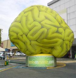 dha cerebro
